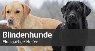 28022013_Blindenhunde