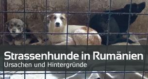 Artikel_Strassenhunde